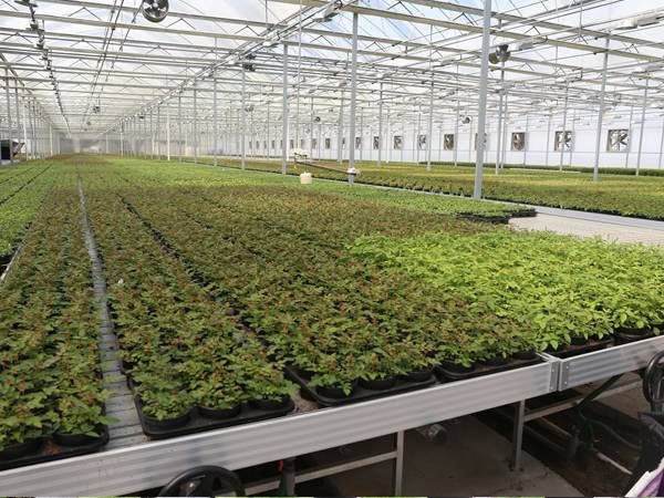 There is a large-scale nursery with ebb and flow greenhouse benches.