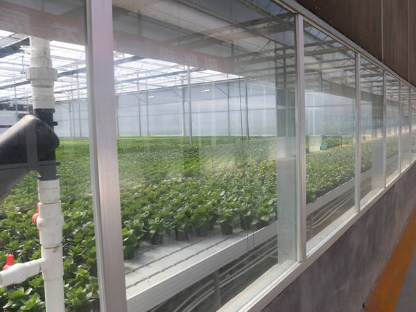 The research greenhouse is designed with ebb and flow greenhouse benches.