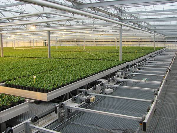 The large scale nursery is installed with shuttle rolling bench system.