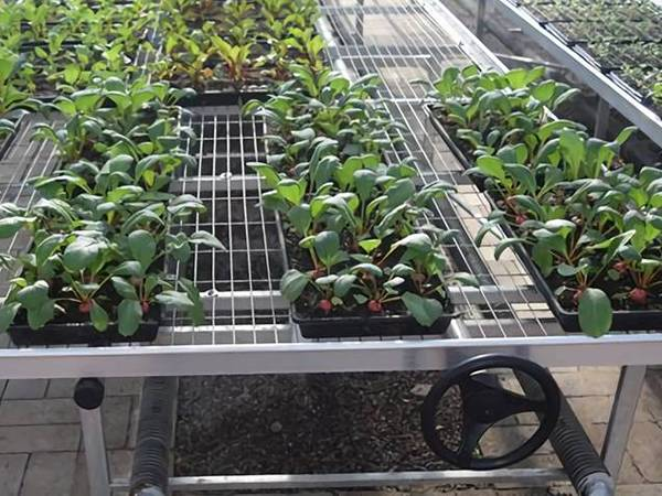 There are many potted green plants on the welded wire mesh bench tops